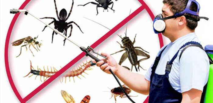 Top 10 Insect Treatment to Reduce Swelling and Itching of Insects Bites in York PA
