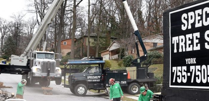 Tree Removal Service Including Tree Care & Stump Removal in Lancaster PA